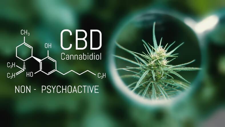 Przyjmowanie CBD w leczeniu paliatywnym i u schyłku życia